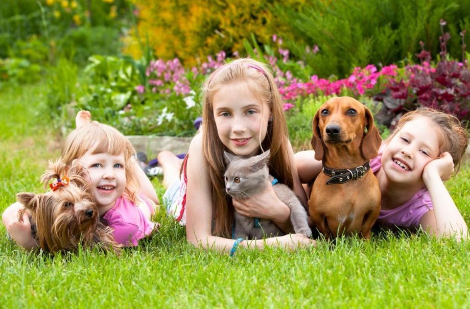 Нужны ли ребенку домашние животные?