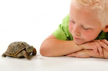 Что делать, если ребенок медлительный?